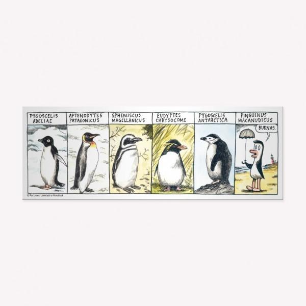 Pack Tira Razas de Pingüinos x 5
